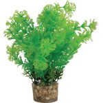 Zolux Roślina średnia z zestawu nr 1